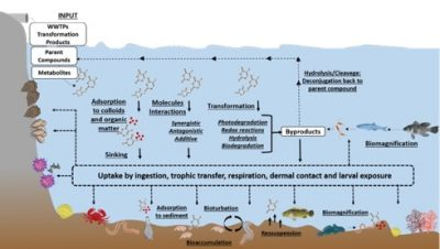 Behaviour and fate of anticancer drugs, in conjugation to abiotic and biotic processes, in the marine environment